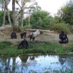 Romagne 2016 : Vallée des singes