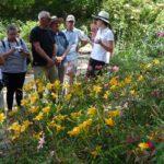 Sortie NGL du 01/07/2018: parc des chemins de la rose